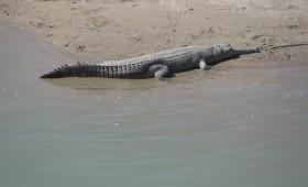 rivers-safari--in-nepal